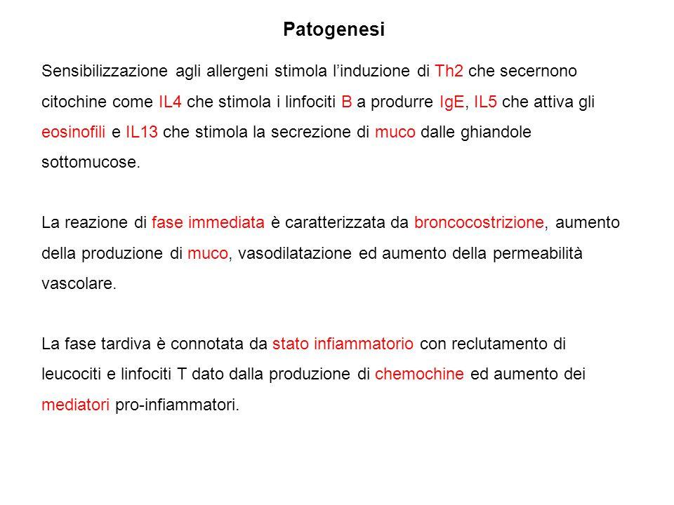 Patogenesi Sensibilizzazione agli allergeni stimola l'induzione di Th2 che secernono citochine come IL4 che stimola i linfociti B a produrre IgE, IL5