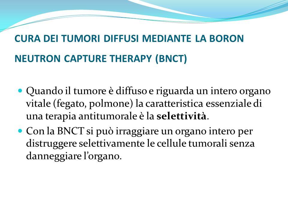 CURA DEI TUMORI DIFFUSI MEDIANTE LA BORON NEUTRON CAPTURE THERAPY (BNCT) Quando il tumore è diffuso e riguarda un intero organo vitale (fegato, polmone) la caratteristica essenziale di una terapia antitumorale è la selettività.