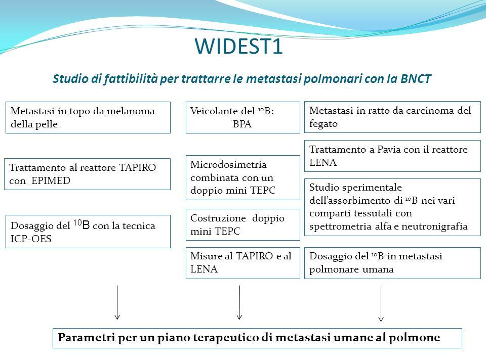 WIDEST1 Studio di fattibilità per trattarre le metastasi polmonari con la BNCT Trattamento al reattore TAPIRO con EPIMED Veicolante del 10 B: BPA Metastasi in ratto da carcinoma del fegato Metastasi in topo da melanoma della pelle Trattamento a Pavia con il reattore LENA Studio sperimentale dell'assorbimento di 10 B nei vari comparti tessutali con spettrometria alfa e neutronigrafia Dosaggio del 10 B con la tecnica ICP-OES Microdosimetria combinata con un doppio mini TEPC Costruzione doppio mini TEPC Misure al TAPIRO e al LENA Parametri per un piano terapeutico di metastasi umane al polmone Dosaggio del 10 B in metastasi polmonare umana