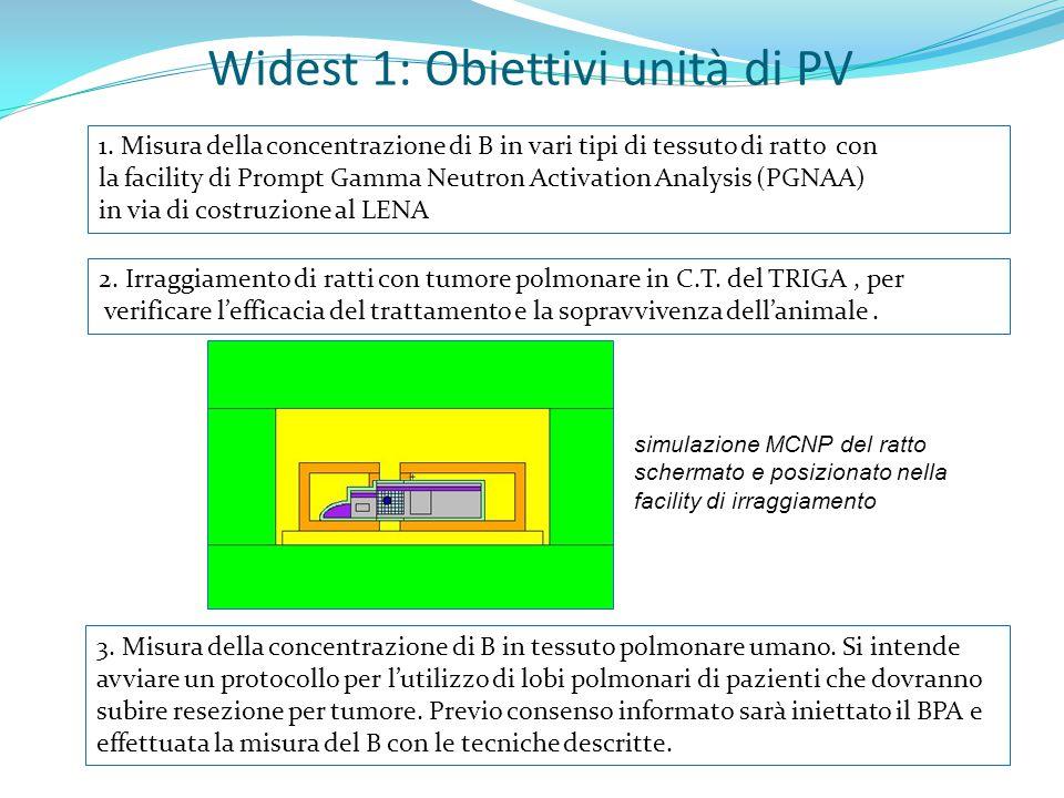 Widest 1: Obiettivi unità di PV 2. Irraggiamento di ratti con tumore polmonare in C.T.