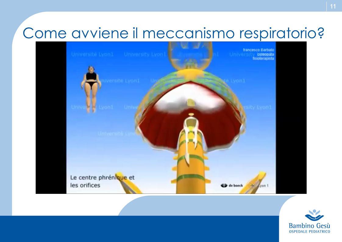 11 Come avviene il meccanismo respiratorio?