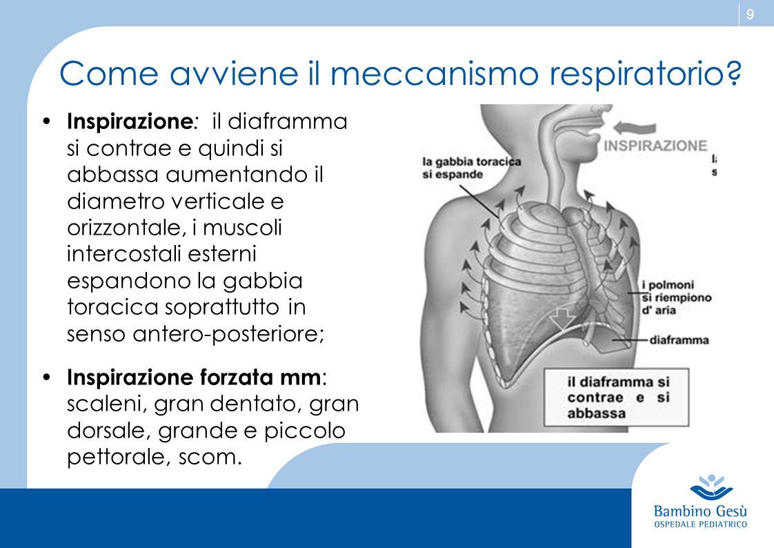 9 Come avviene il meccanismo respiratorio? Inspirazione : il diaframma si contrae e quindi si abbassa aumentando il diametro verticale e orizzontale,