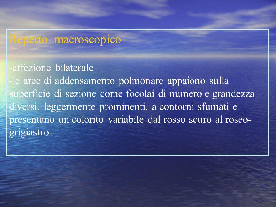 Agenti eziologici -Pneumococco -Stafilococchi -H. influentiae -Mycoplasma -Clamidiae -Legionella -Pseudomonas aeruginosa