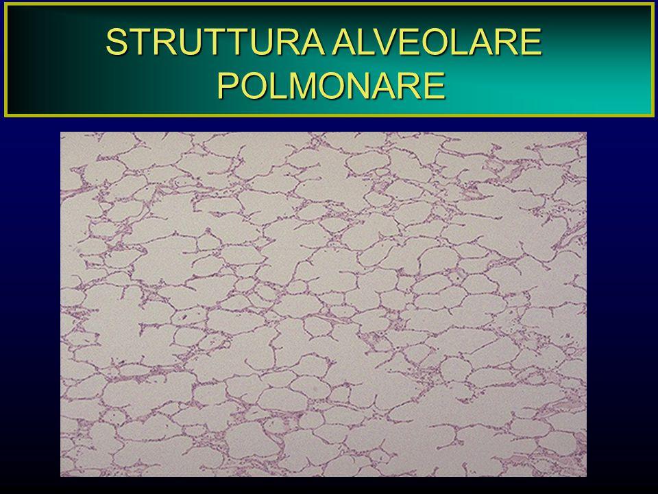 TOSSICITA' DELL'APPARATO RESPIRATORIO Scambio gassoso polmonare consiste in: ventilazione (capacità polmonare 5700 cm 3, vol.