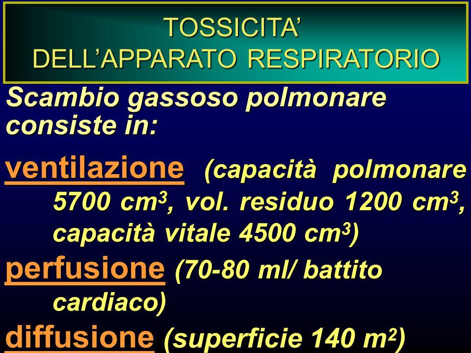 PATOGENESI DELLA TOSSICITA' POLMONARE stress ossidativo (mediato da O 3, NO 2, fumo di sigaretta, cellule ) risposte immunologiche (reazioni allergiche, modulazione di risposte immunitarie) deposizione di particelle (dipendente dalla dimensione) proliferazione cellulare (iperplasia, tumore)