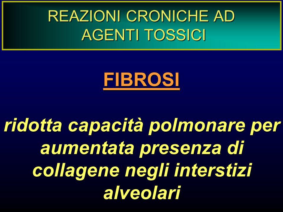 REAZIONI CRONICHE AD AGENTI TOSSICI FIBROSI ridotta capacità polmonare per aumentata presenza di collagene negli interstizi alveolari