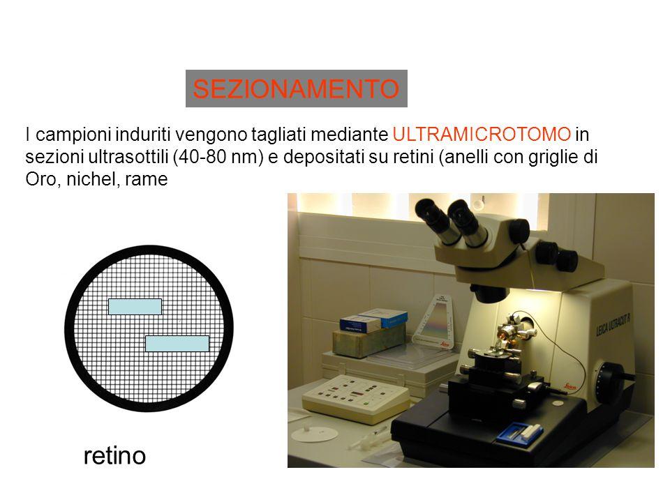 SEZIONAMENTO I campioni induriti vengono tagliati mediante ULTRAMICROTOMO in sezioni ultrasottili (40-80 nm) e depositati su retini (anelli con griglie di Oro, nichel, rame retino