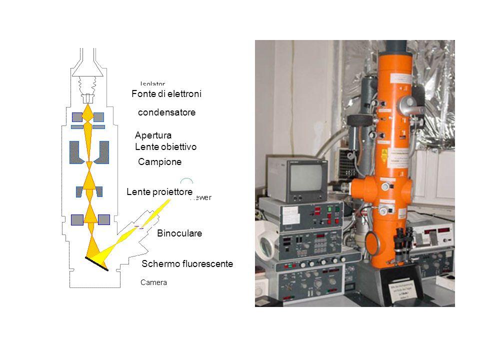 Schermo fluorescente Binoculare Lente proiettore Campione Apertura Lente obiettivo condensatore Fonte di elettroni