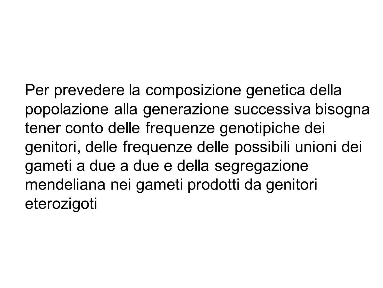 Per prevedere la composizione genetica della popolazione alla generazione successiva bisogna tener conto delle frequenze genotipiche dei genitori, del