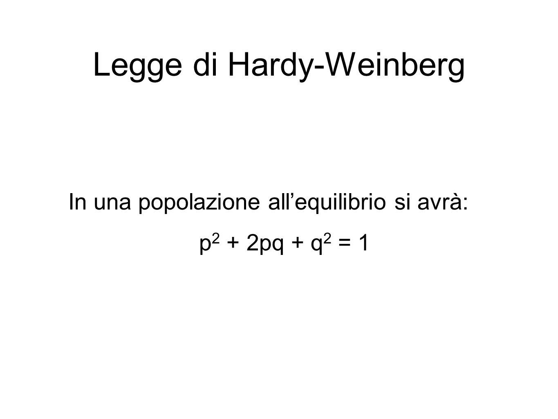 Legge di Hardy-Weinberg In una popolazione all'equilibrio si avrà: p 2 + 2pq + q 2 = 1