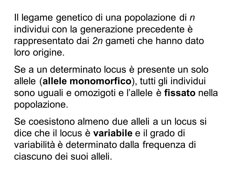 Il legame genetico di una popolazione di n individui con la generazione precedente è rappresentato dai 2n gameti che hanno dato loro origine. Se a un