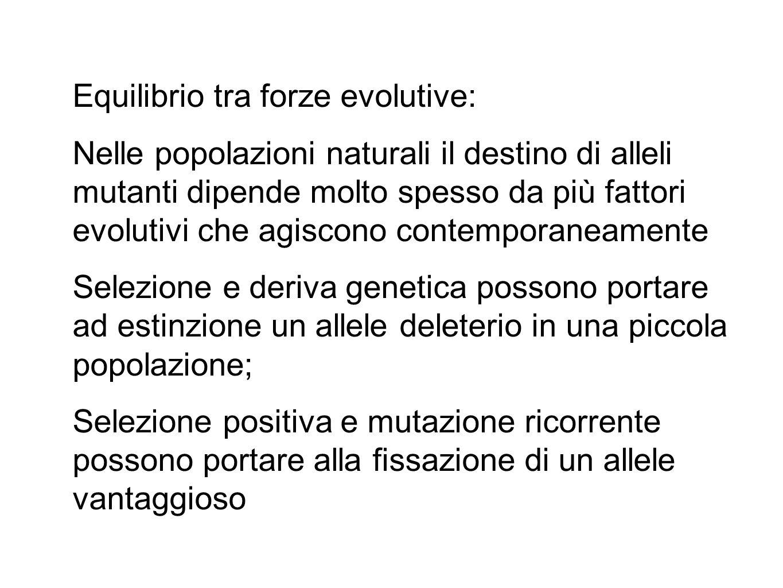 Equilibrio tra forze evolutive: Nelle popolazioni naturali il destino di alleli mutanti dipende molto spesso da più fattori evolutivi che agiscono con