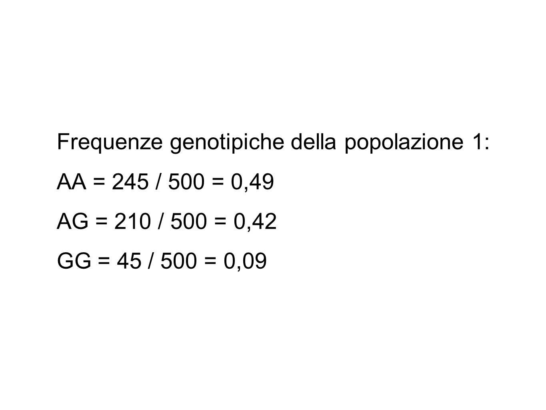 Frequenze alleliche: 1° popolazione 2n = 2 x 500 = 1000 gameti (2 x 245) + (1 x 210) = 700 gameti con l'allele A (1 x 210) + (2 x 45) = 300 gameti con l'allele G 700 / 1000 = 0,7 frequenza di A (p) 300 / 1000= 0,3 frequenza di G (q)