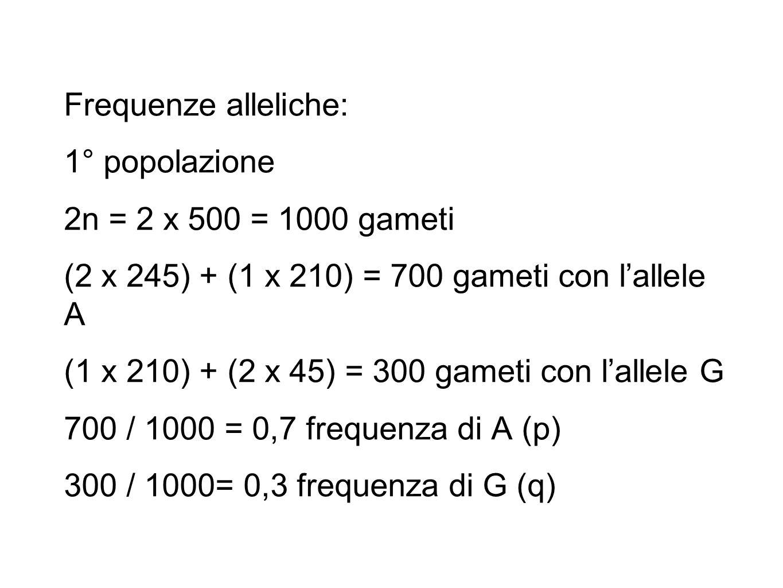 2°popolazione 2n = 2 x 500 = 1000 gameti (2 x 350) + (1 x 0) = 700 gameti con l'allele A (1 x 0) + (2 x 150) = 300 gameti con l'allele G 700 / 1000 = 0,7 frequenza di A (p) 300 / 1000= 0,3 frequenza di G (q)