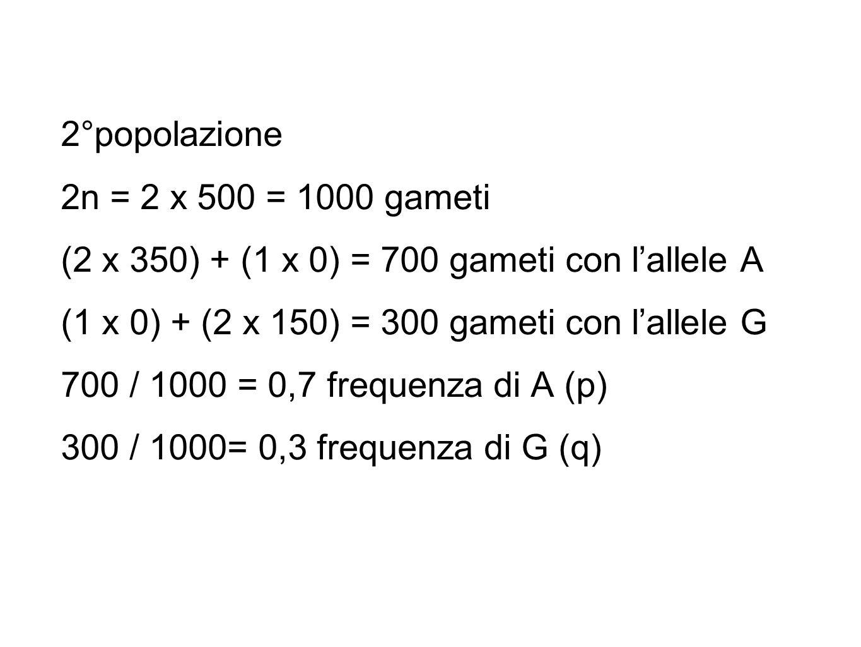 2°popolazione 2n = 2 x 500 = 1000 gameti (2 x 350) + (1 x 0) = 700 gameti con l'allele A (1 x 0) + (2 x 150) = 300 gameti con l'allele G 700 / 1000 =