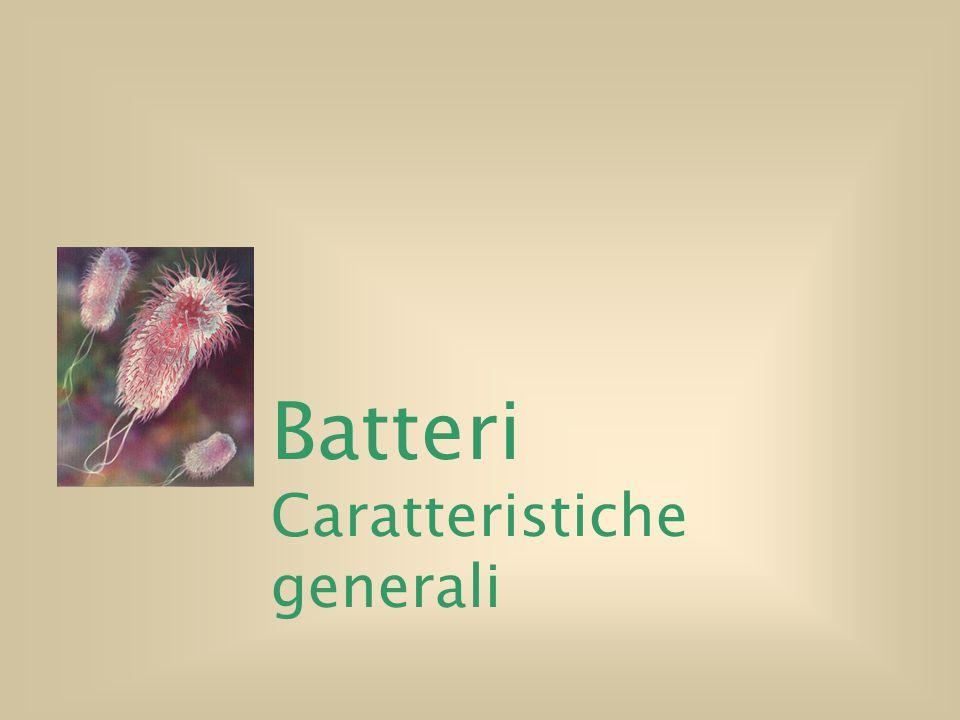 Batteri Caratteristiche generali