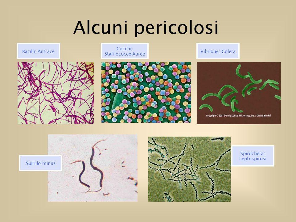 Alcuni pericolosi Spirocheta: Leptospirosi Bacilli: Antrace Cocchi: Stafilococco Aureo Vibrione: Colera Spirillo minus