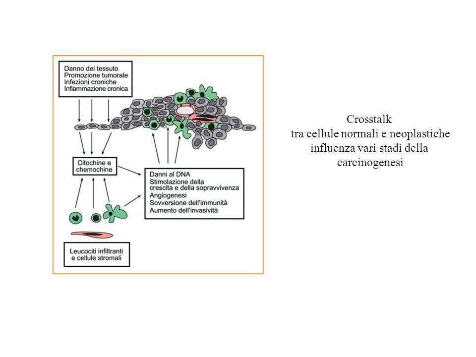 Crosstalk tra cellule normali e neoplastiche influenza vari stadi della carcinogenesi