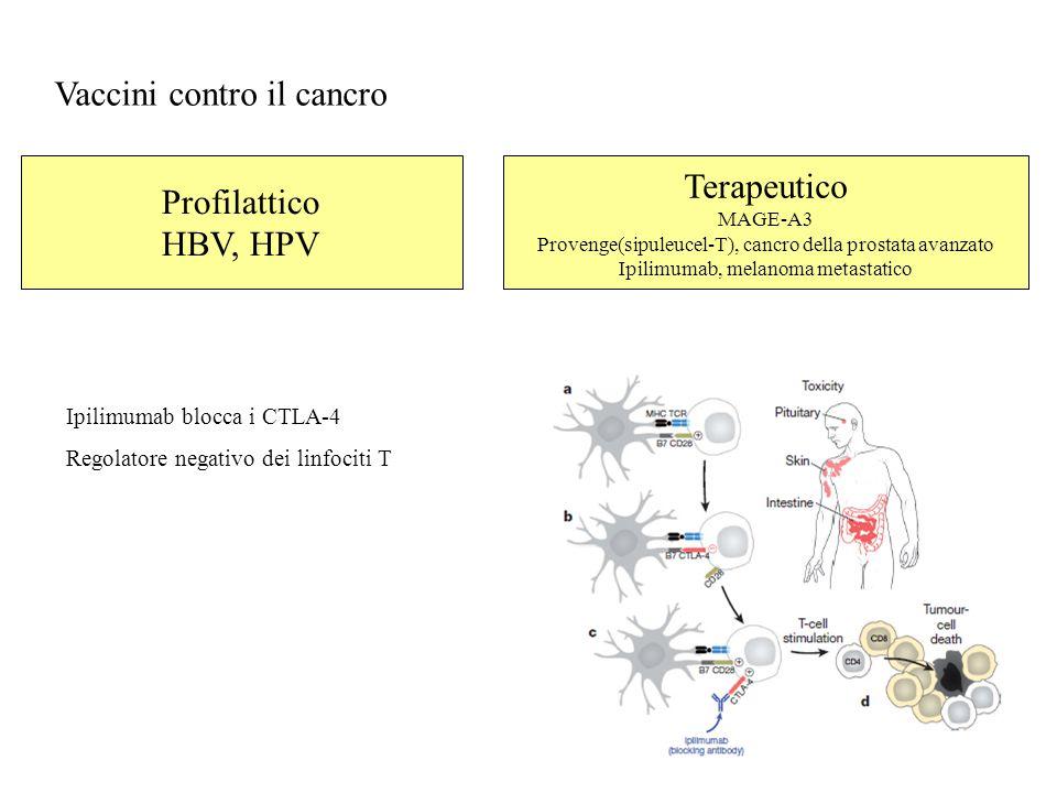 Vaccini contro il cancro Profilattico HBV, HPV Terapeutico MAGE-A3 Provenge(sipuleucel-T), cancro della prostata avanzato Ipilimumab, melanoma metastatico Ipilimumab blocca i CTLA-4 Regolatore negativo dei linfociti T