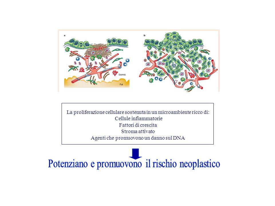 La proliferazione cellulare sostenuta in un microambiente ricco di: Cellule infiammatorie Fattori di crescita Stroma attivato Agenti che promuovono un danno sul DNA