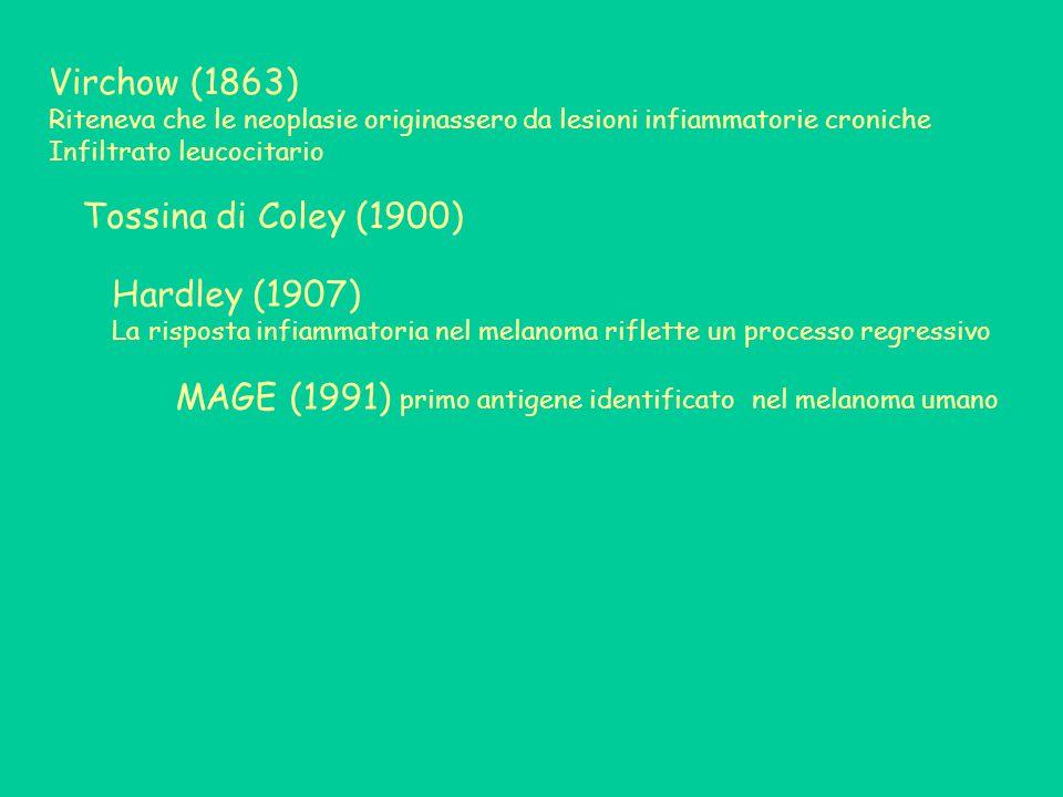 Virchow (1863) Riteneva che le neoplasie originassero da lesioni infiammatorie croniche Infiltrato leucocitario Hardley (1907) La risposta infiammatoria nel melanoma riflette un processo regressivo Tossina di Coley (1900) MAGE (1991) primo antigene identificato nel melanoma umano