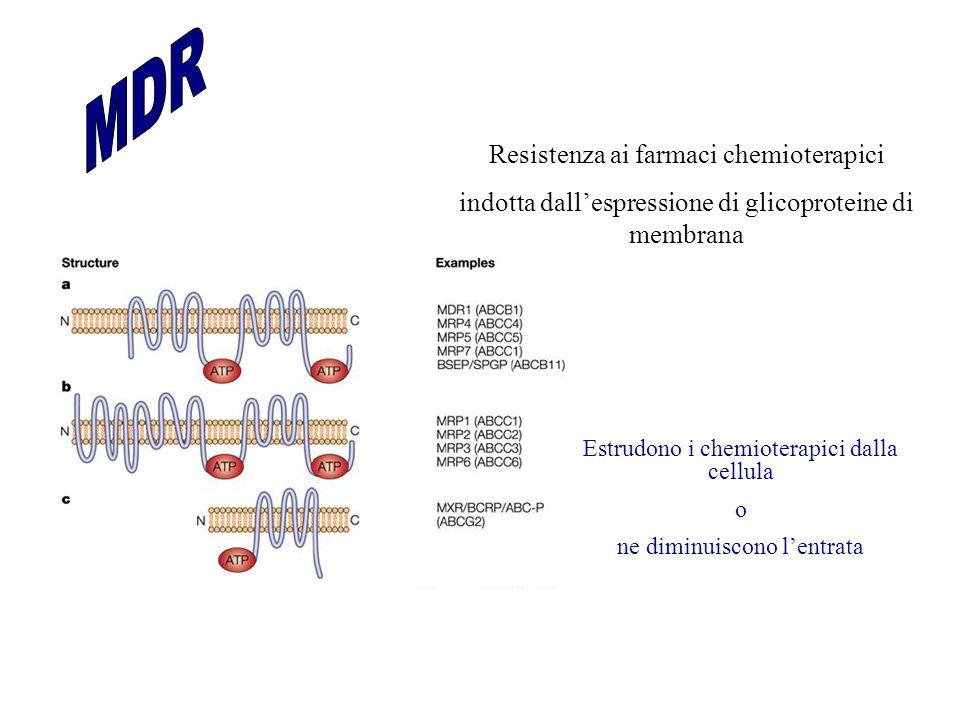 Resistenza ai farmaci chemioterapici indotta dall'espressione di glicoproteine di membrana Estrudono i chemioterapici dalla cellula o ne diminuiscono l'entrata