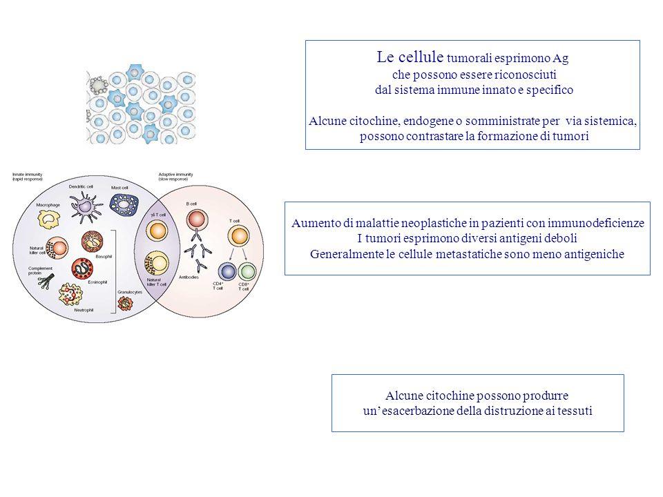 Le cellule tumorali esprimono Ag che possono essere riconosciuti dal sistema immune innato e specifico Alcune citochine, endogene o somministrate per via sistemica, possono contrastare la formazione di tumori Aumento di malattie neoplastiche in pazienti con immunodeficienze I tumori esprimono diversi antigeni deboli Generalmente le cellule metastatiche sono meno antigeniche Alcune citochine possono produrre un'esacerbazione della distruzione ai tessuti