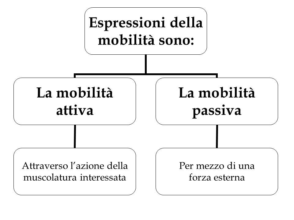 Espressioni della mobilità sono: La mobilità attiva Attraverso l'azione della muscolatura interessata La mobilità passiva Per mezzo di una forza ester
