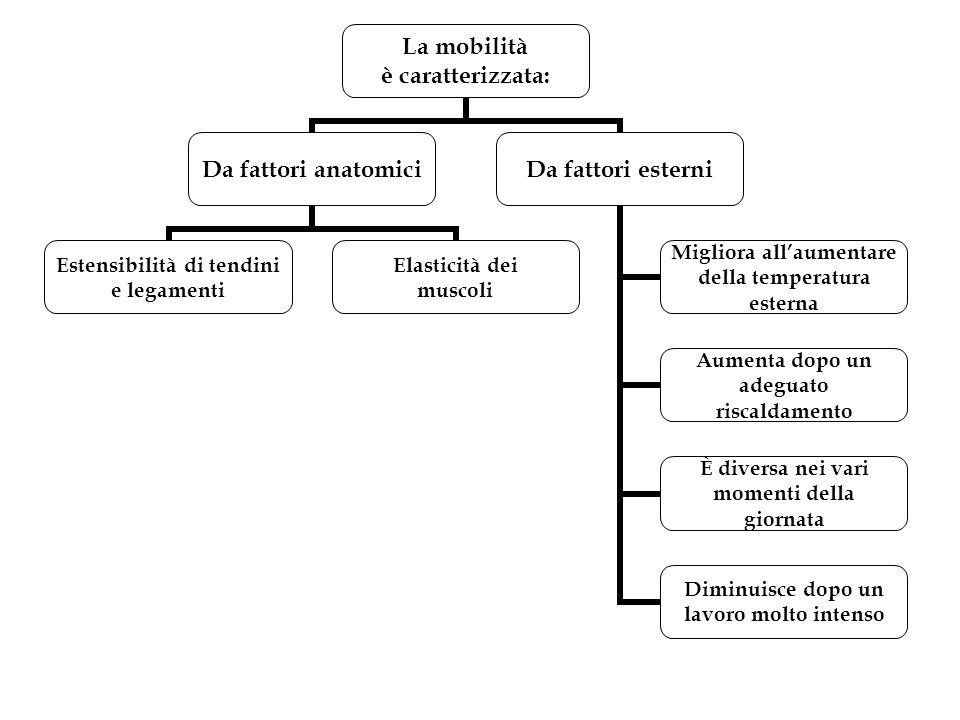 La mobilità è caratterizzata: Da fattori anatomici Estensibilità di tendini e legamenti Elasticità dei muscoli Da fattori esterni Migliora all'aumenta