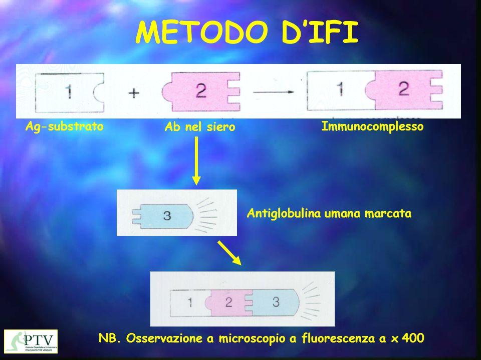 Antiglobulina umana marcata NB. Osservazione a microscopio a fluorescenza a x 400 Ag-substrato Ab nel siero Immunocomplesso METODO D'IFI