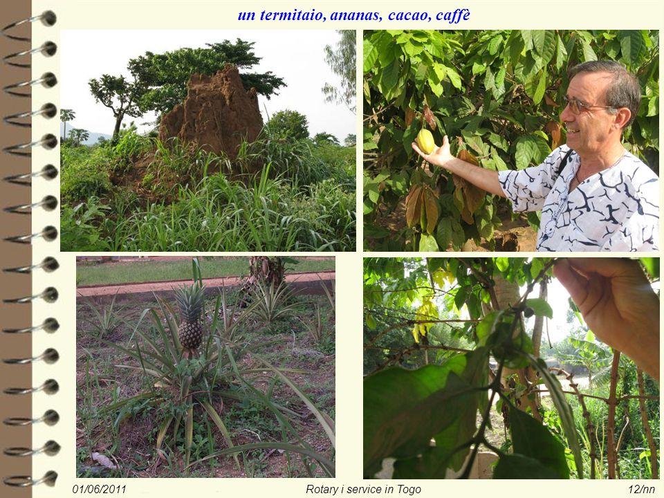 01/06/2011Rotary i service in Togo12/nn un termitaio, ananas, cacao, caffè