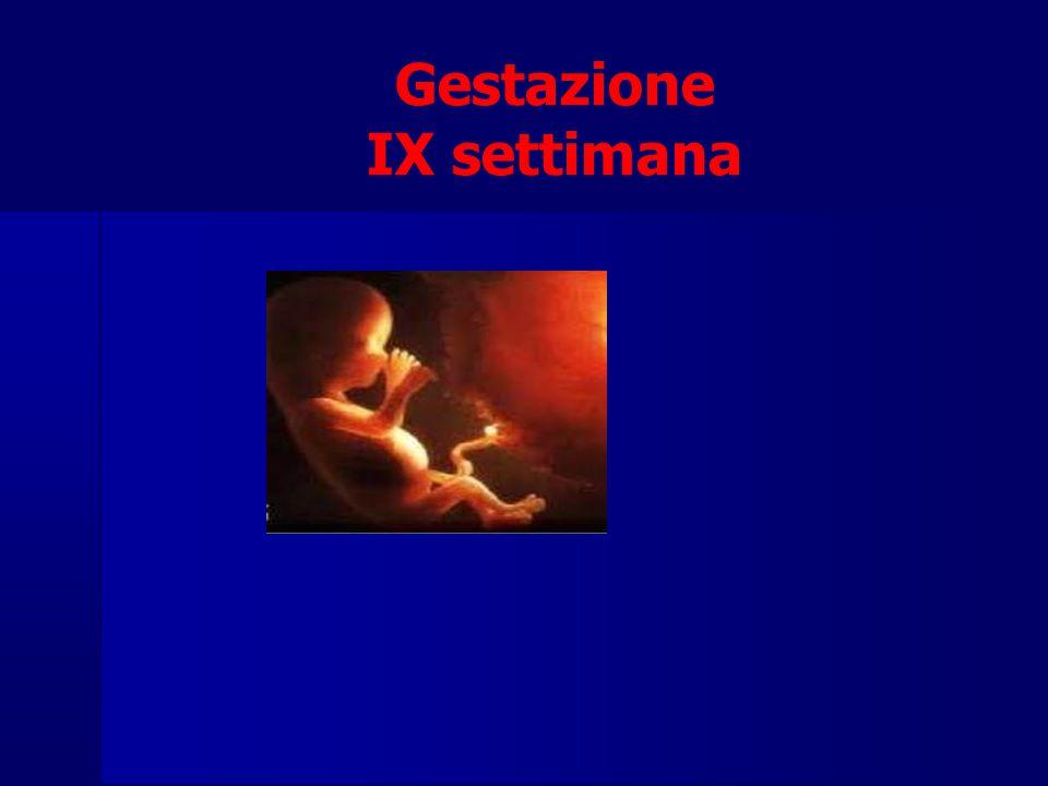 Gestazione IX settimana