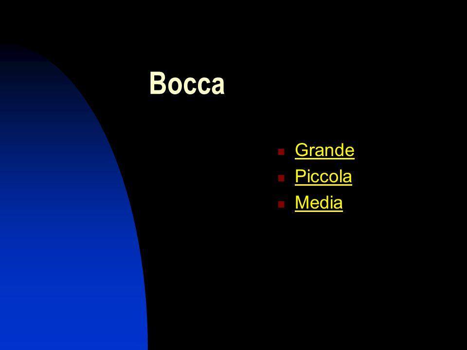 Bocca Grande Piccola Media