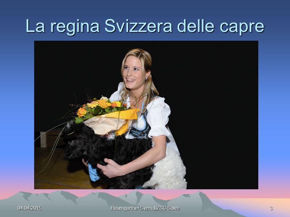 La regina Svizzera delle capre 04.04.2015Baumgartner Sven, LZSG Salez3