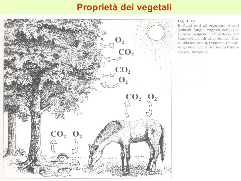  posizione eretta (per il migliore sfruttamento della luce, per la migliore diffusione delle spore e dei semi, per l'allontanamento dagli animali fitofagi); Nelle piante terrestri si osserva la comparsa graduale di nuovi caratteri tra cui la posizione eretta