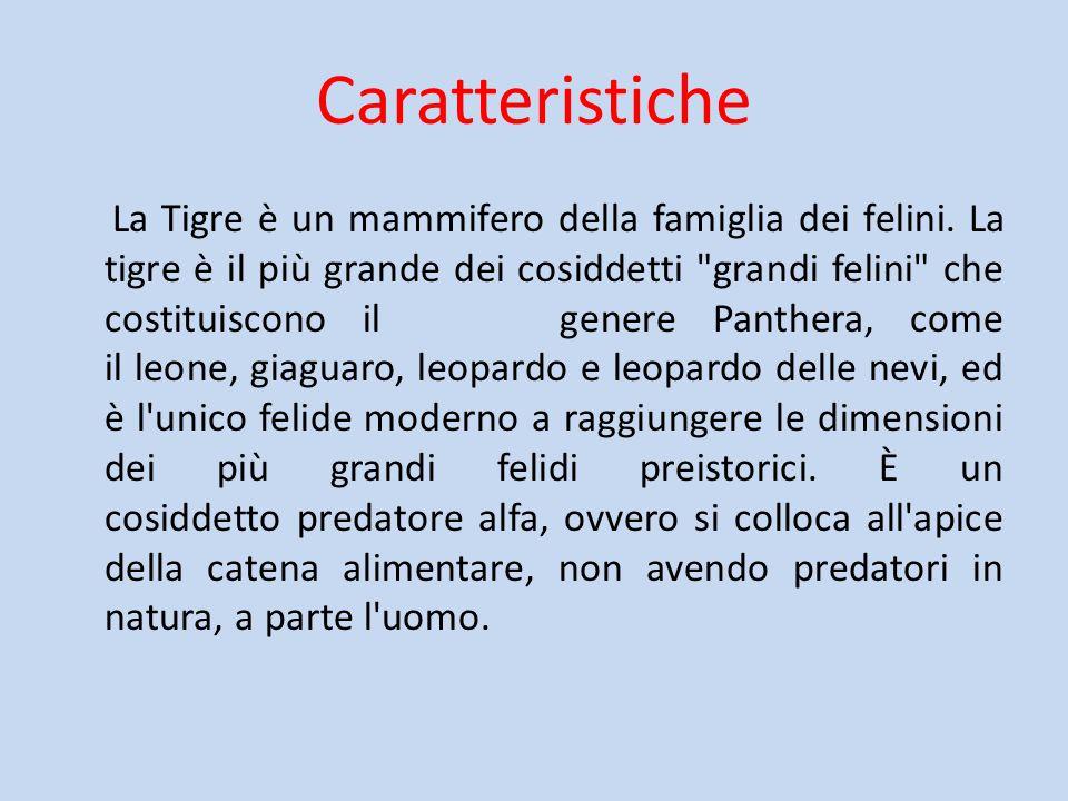 Caratteristiche La Tigre è un mammifero della famiglia dei felini. La tigre è il più grande dei cosiddetti