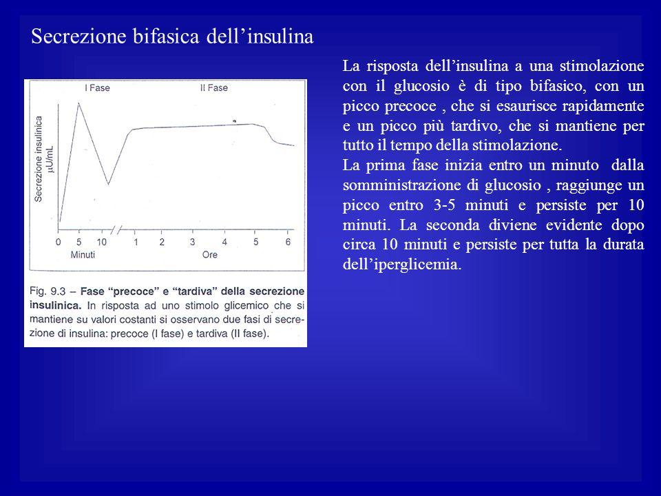 Secrezione bifasica dell'insulina La risposta dell'insulina a una stimolazione con il glucosio è di tipo bifasico, con un picco precoce, che si esauri