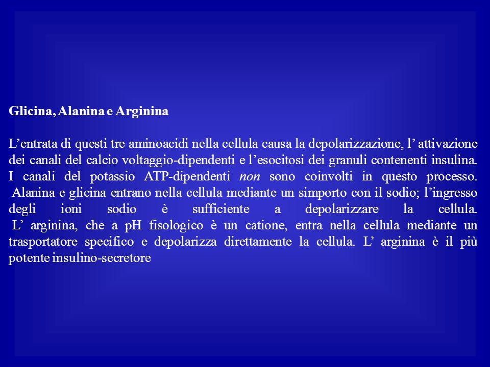 Glicina, Alanina e Arginina L'entrata di questi tre aminoacidi nella cellula causa la depolarizzazione, l' attivazione dei canali del calcio voltaggio