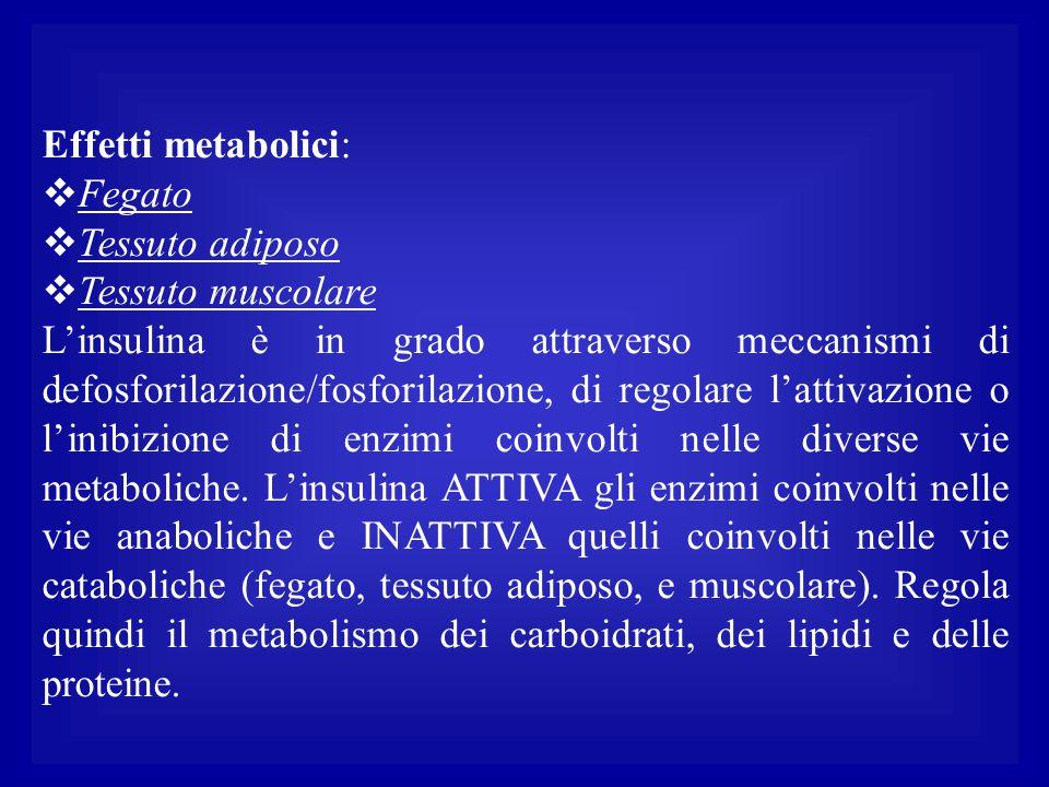 Effetti metabolici:  Fegato  Tessuto adiposo  Tessuto muscolare L'insulina è in grado attraverso meccanismi di defosforilazione/fosforilazione, di