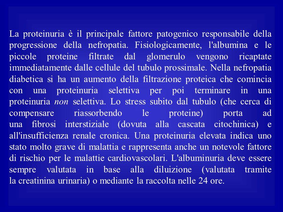 La proteinuria è il principale fattore patogenico responsabile della progressione della nefropatia. Fisiologicamente, l'albumina e le piccole proteine