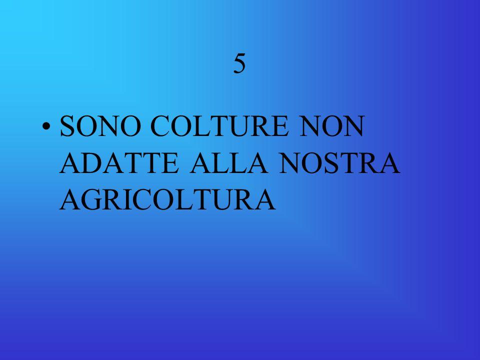 5 SONO COLTURE NON ADATTE ALLA NOSTRA AGRICOLTURA