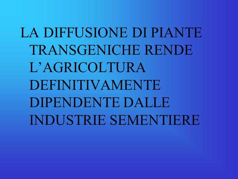 LA DIFFUSIONE DI PIANTE TRANSGENICHE RENDE L'AGRICOLTURA DEFINITIVAMENTE DIPENDENTE DALLE INDUSTRIE SEMENTIERE