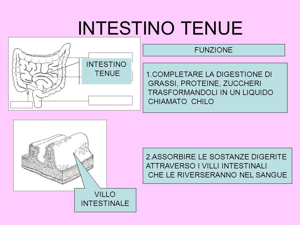 INTESTINO TENUE INTESTINO TENUE FUNZIONE 1.COMPLETARE LA DIGESTIONE DI GRASSI, PROTEINE, ZUCCHERI TRASFORMANDOLI IN UN LIQUIDO CHIAMATO CHILO 2.ASSORBIRE LE SOSTANZE DIGERITE ATTRAVERSO I VILLI INTESTINALI CHE LE RIVERSERANNO NEL SANGUE VILLO INTESTINALE