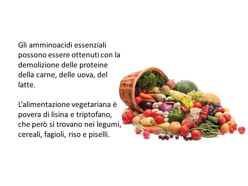 Gli amminoacidi essenziali possono essere ottenuti con la demolizione delle proteine della carne, delle uova, del latte. L'alimentazione vegetariana è