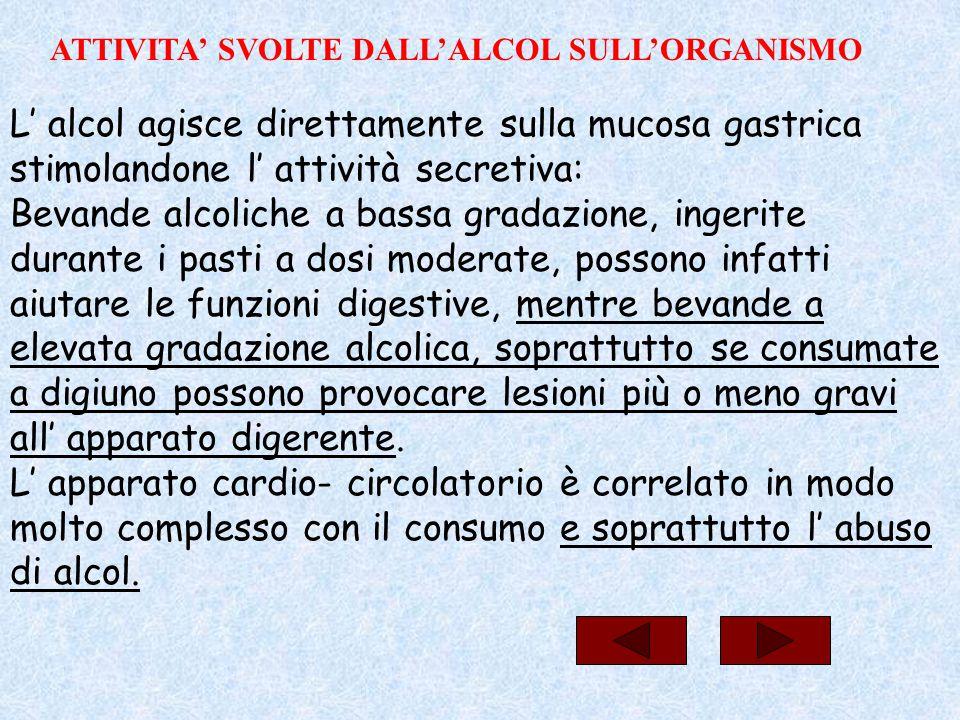 L' alcol agisce direttamente sulla mucosa gastrica stimolandone l' attività secretiva: Bevande alcoliche a bassa gradazione, ingerite durante i pasti