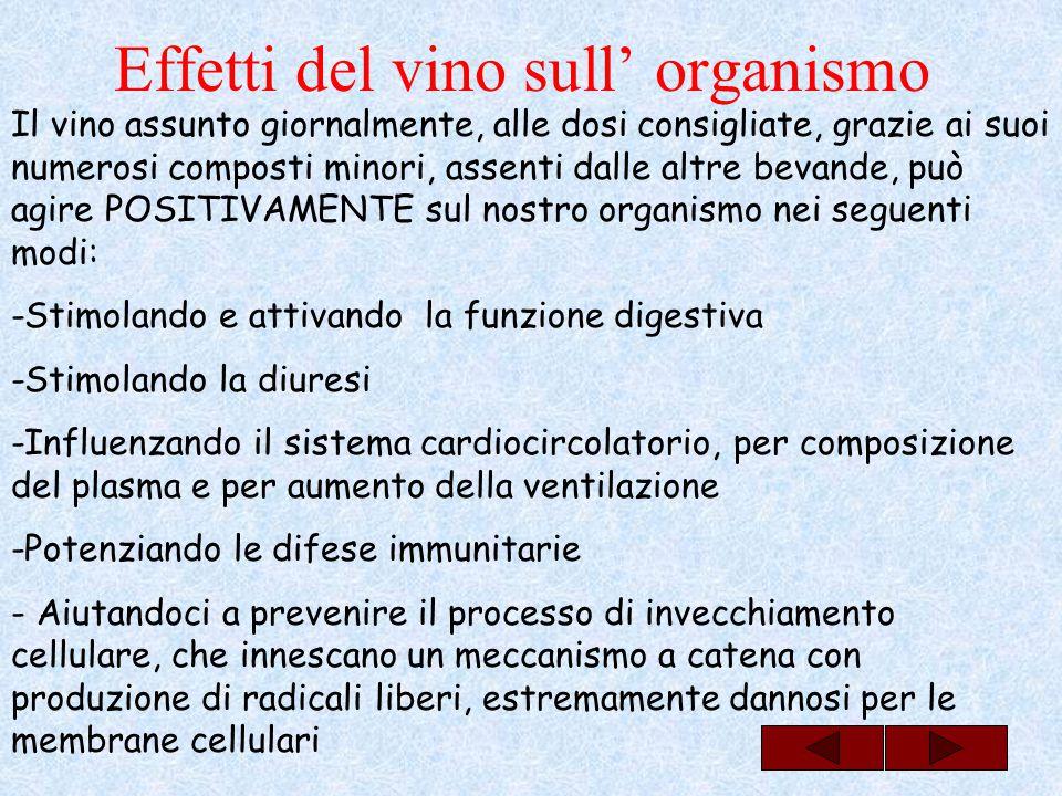 Effetti del vino sull' organismo Il vino assunto giornalmente, alle dosi consigliate, grazie ai suoi numerosi composti minori, assenti dalle altre bev