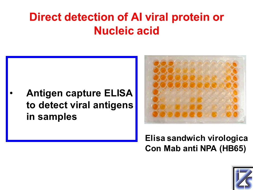 Direct detection of AI viral protein or Nucleic acid Antigen capture ELISA to detect viral antigens in samples Elisa sandwich virologica Con Mab anti NPA (HB65)