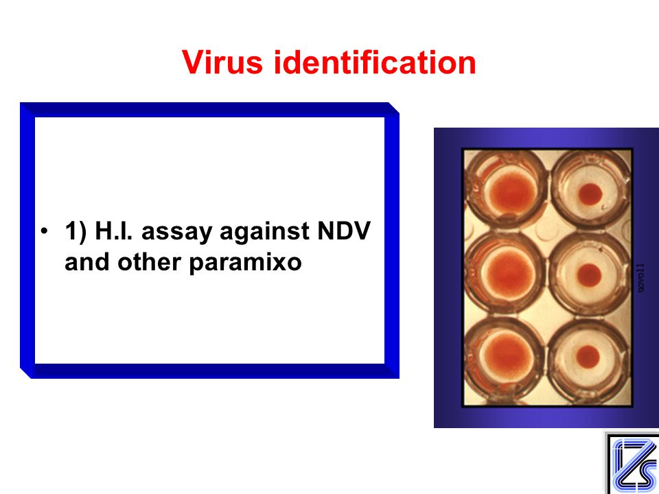 Virus identification 1) H.I. assay against NDV and other paramixo