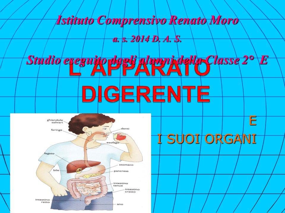 L' intestino si divide in: intestino Tenue e intestino Crasso.
