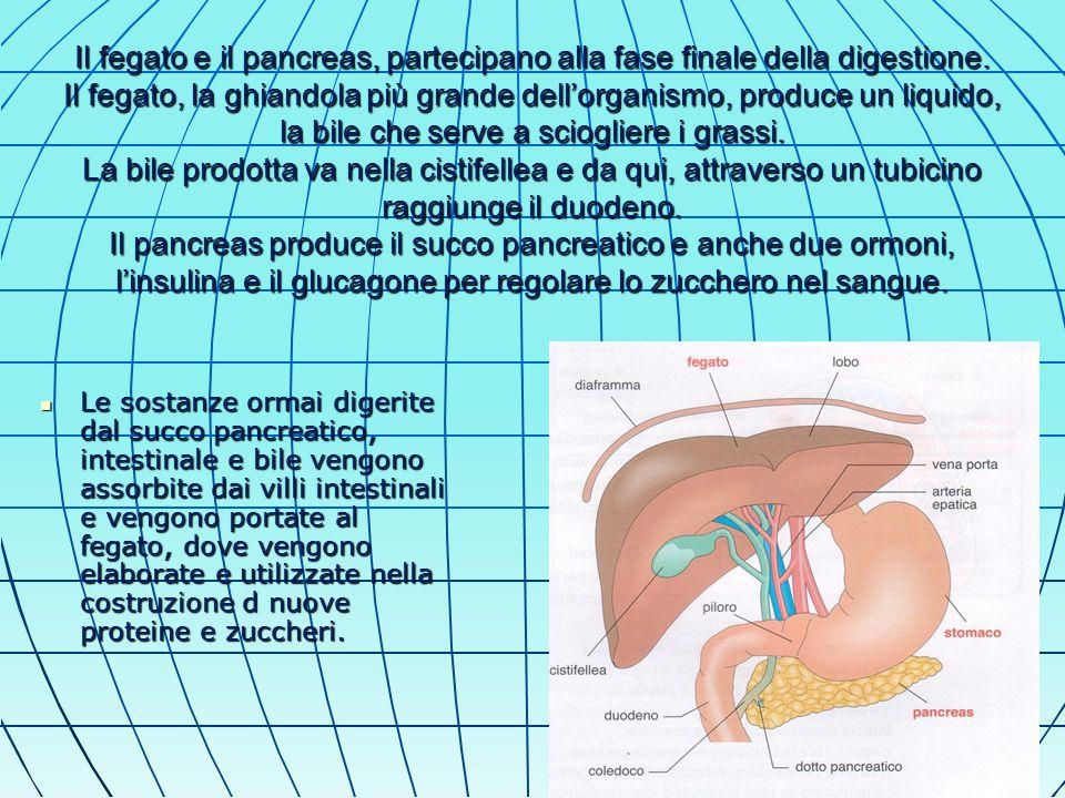 Il fegato e il pancreas, partecipano alla fase finale della digestione.